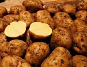 Сорт картофеля Ривьера