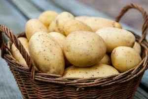 Как вырастить хороший и здоровый картофель
