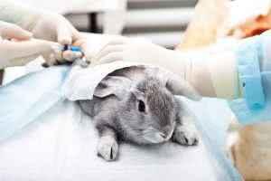 Незаразные болезни кроликов