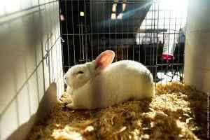 Клетки для кроликов. Виды и конструкции.