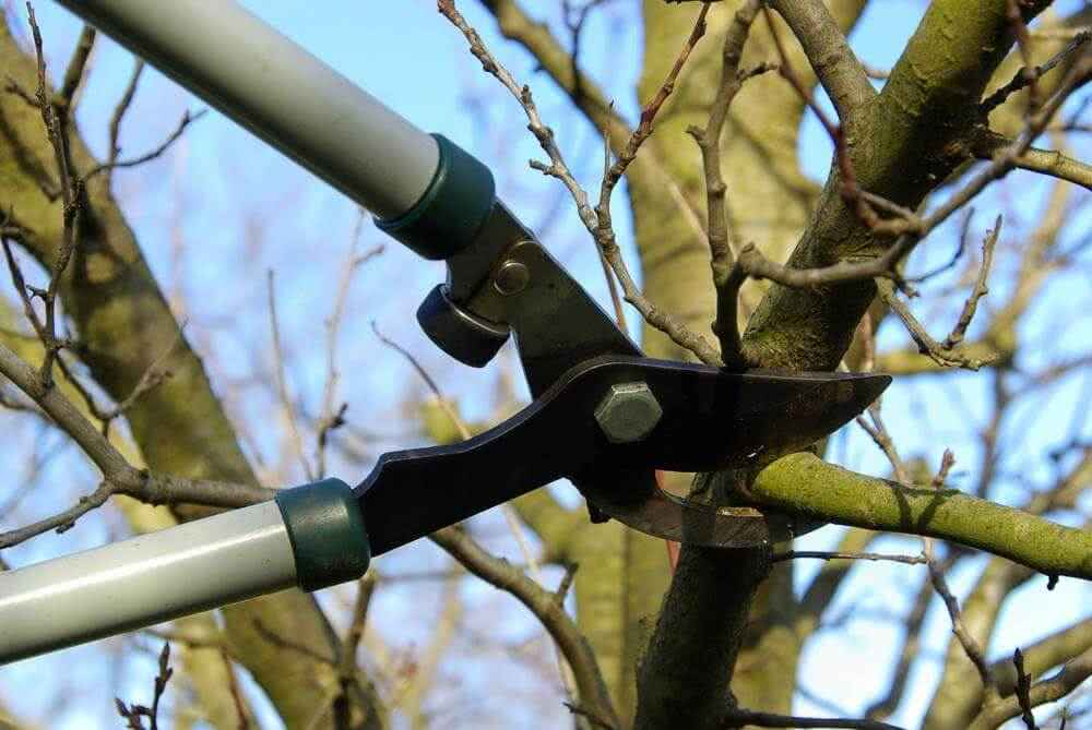 Обрезка фруктовых деревьев