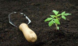 Гумус для рассады