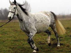 Универсальные породы лошадей
