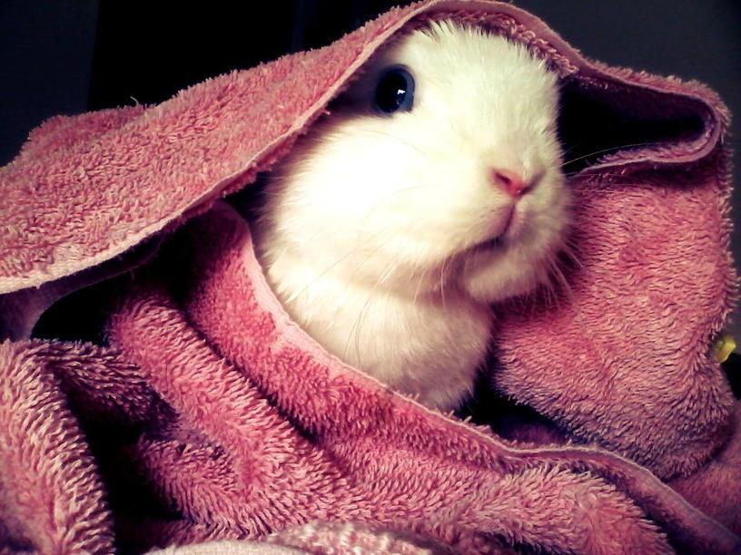 Можно ли мыть кроликов?