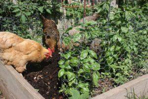 Биологический метод защиты растений и овощей