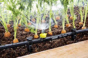 Особенности полива овощей в засуху