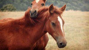 Сколько лет живут лошади в домашних условиях