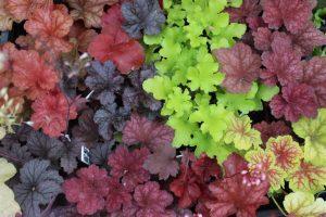 Декоративно-лиственные растения для сада