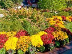 Выбираем цветы для красивой клумбы