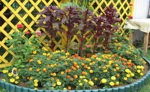 Советы по посадке цветов на участке