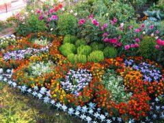 Сочетание растений на цветочной клумбе