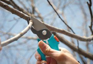 Весенняя обрезка деревьев в саду