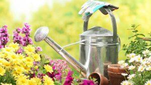 Особенности ухода за садом