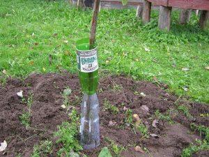 Как утеплить деревья и кустарники на зиму