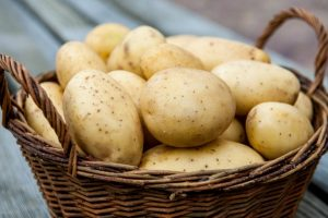 Выращивание и хранение картофеля