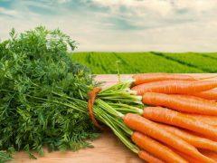 Популярные методы выращивание и хранение моркови