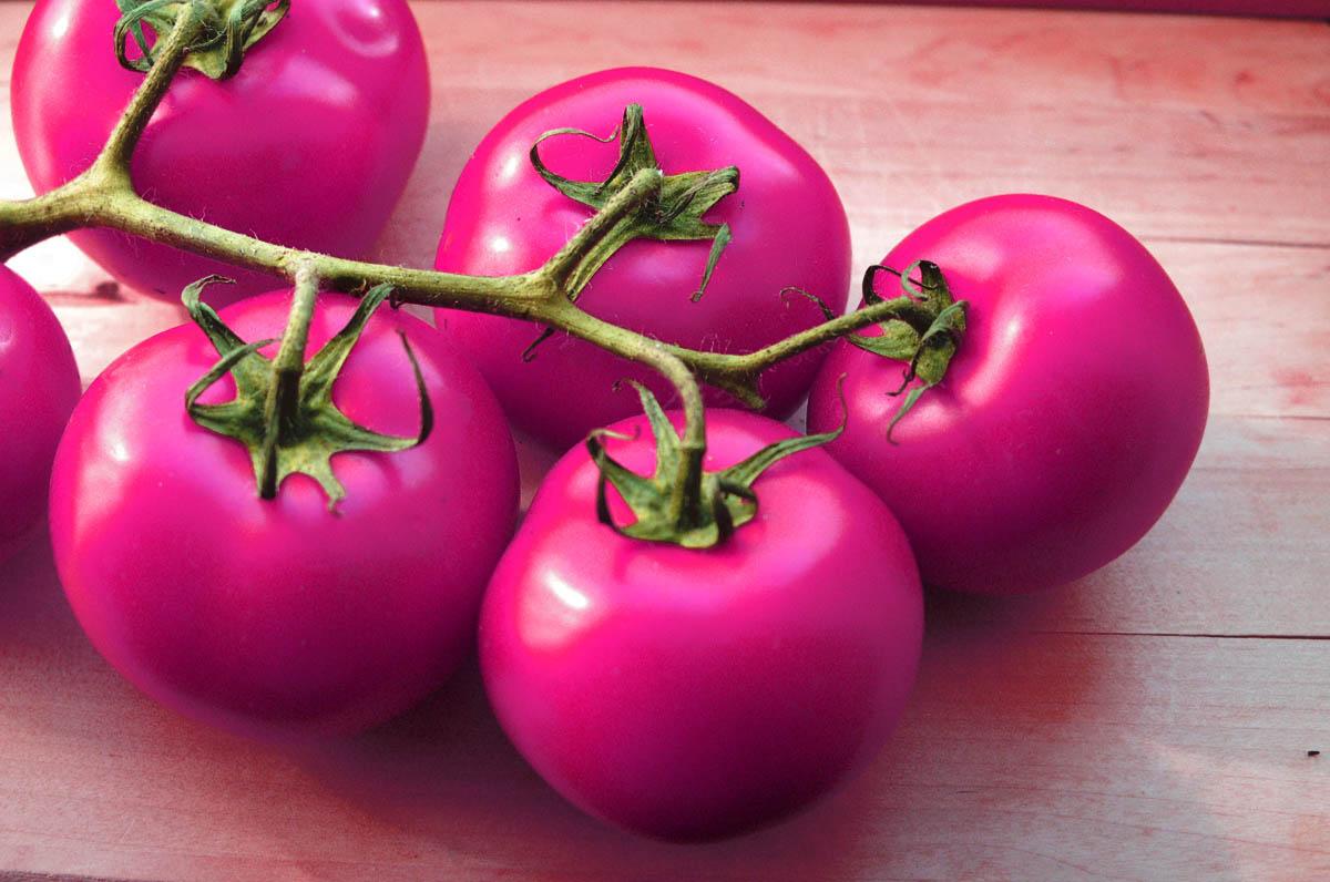 Технология выращивания томатов