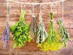 Ароматные травы на Вашей грядке