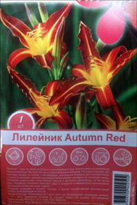 Лилейник паукообразный Autumn Red