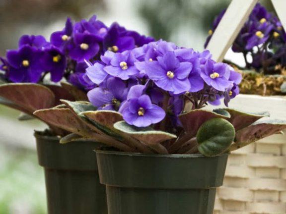 Советы по борьбе с болезнями комнатных растений