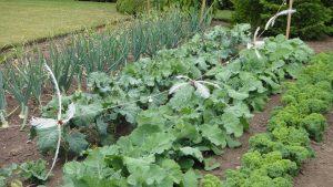 Как сделать огород на дачном участке