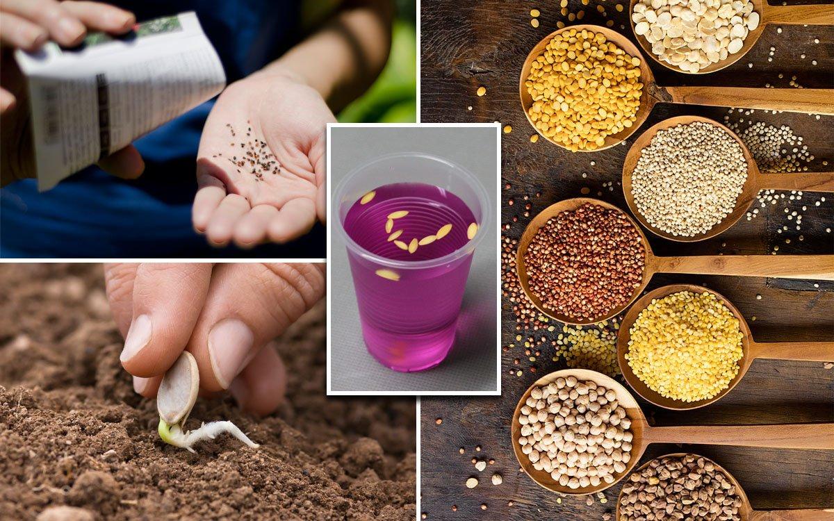 Предпосадочная подготовка семян