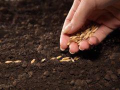 Как правильно сажать семена.