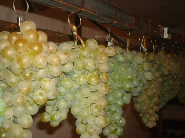 Как сохранить урожай винограда до весны