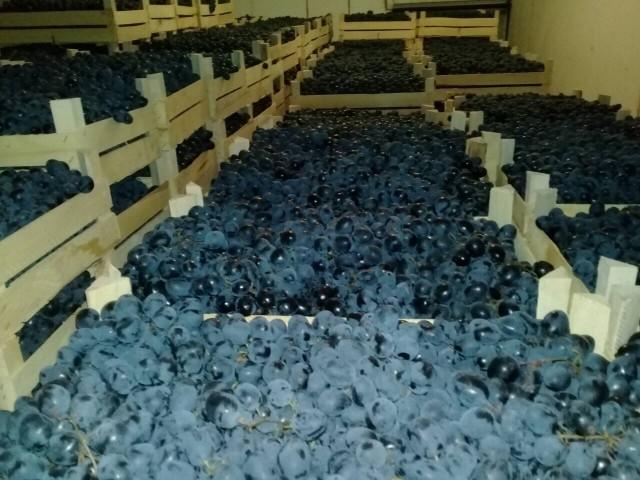 Хранение винограда в ящиках