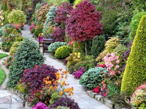 Потрясающие декоративные кустарники для дачи