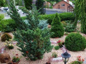 Как выбрать саженцы хвойных растений для сада?