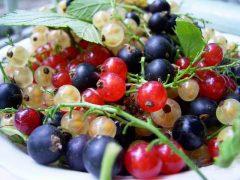 Урожайные сорта черной, белой и красной смородины