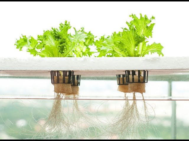 Особенности выращивания овощей методом гидропоники