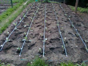 Как сделать капельное орошение для овощей самому