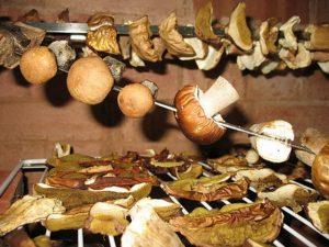 Сбор и сушка грибов на зиму. Интересные факты о грибах.