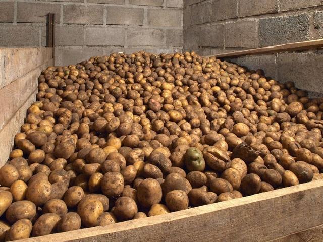 Зимнее хранение картофеля и свеклы. Полезные рекомендации.