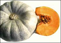 Сорт тыквы Полевичка