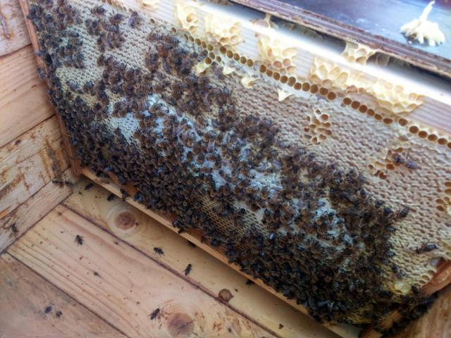 Как обновить пчелиные гнезда