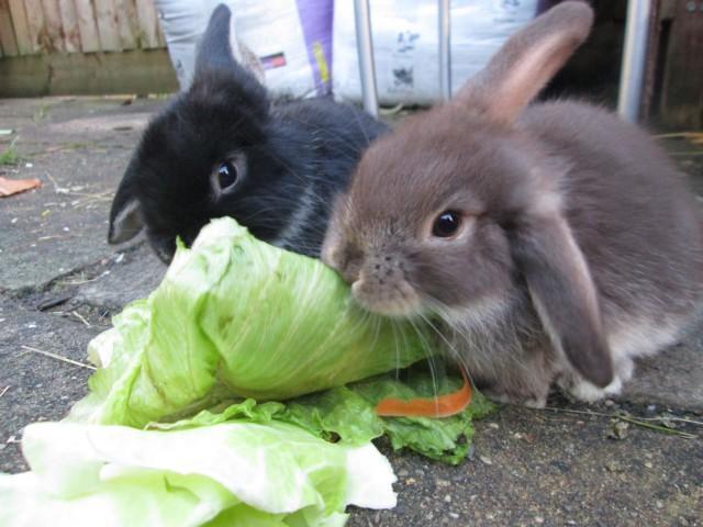 Кормление кроликов в весенне-летний период