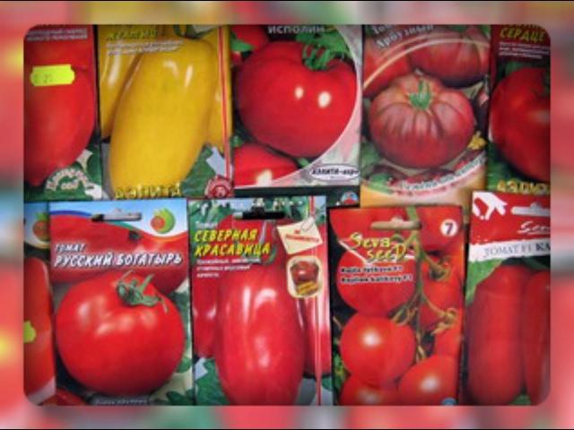 Самые важные вопросы для выбора семян помидор