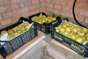 Как сохранить урожай яблок до следующего сезона