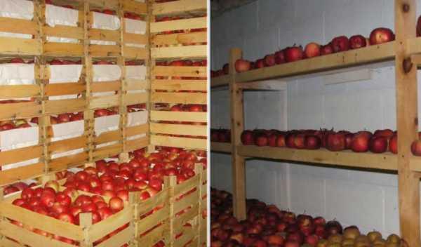 Как хранить яблоки в подвале