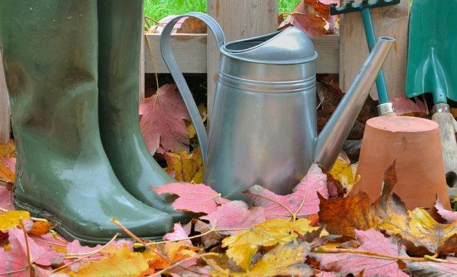 Работы в саду в ноябре