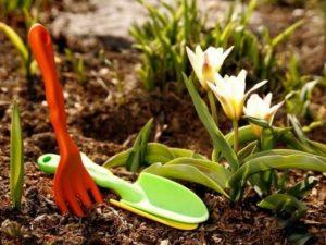 Сад в апреле. Работы в саду в апреле.