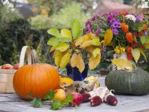 Сад в ноябре. Осенние работы в саду.