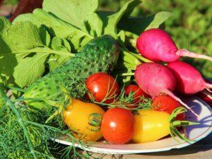 Схемы посева овощных культур