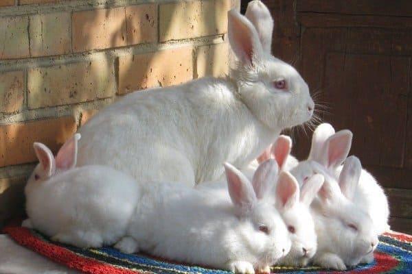 С крольчатами
