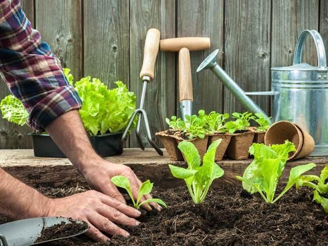 Огородные работы в мае. Что и как сажать.