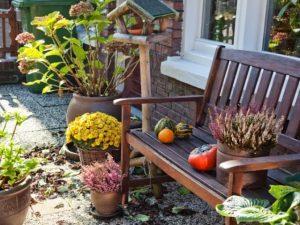 Огородный календарь: октябрь