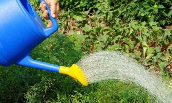 Весенний полив и уход за растениями